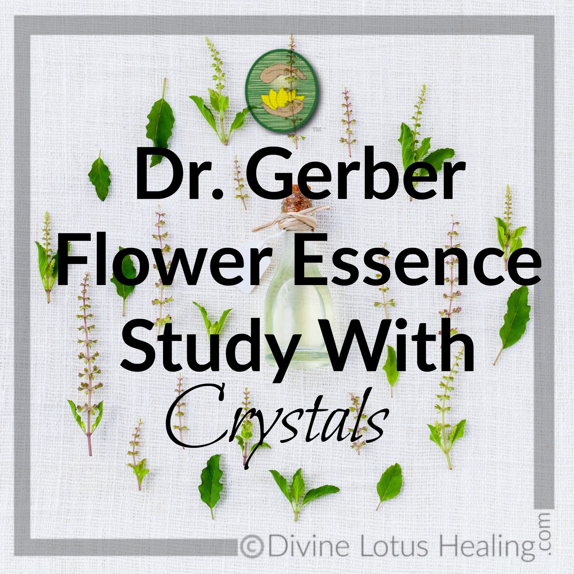 Divine Lotus Healing Dr Gerber Flower Essence Study With Crystals