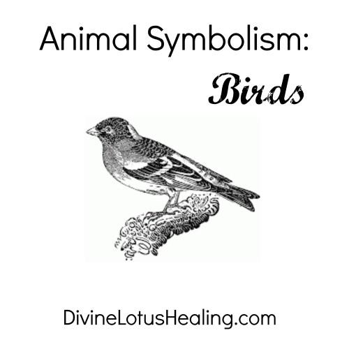 Animal Symbolism Birds