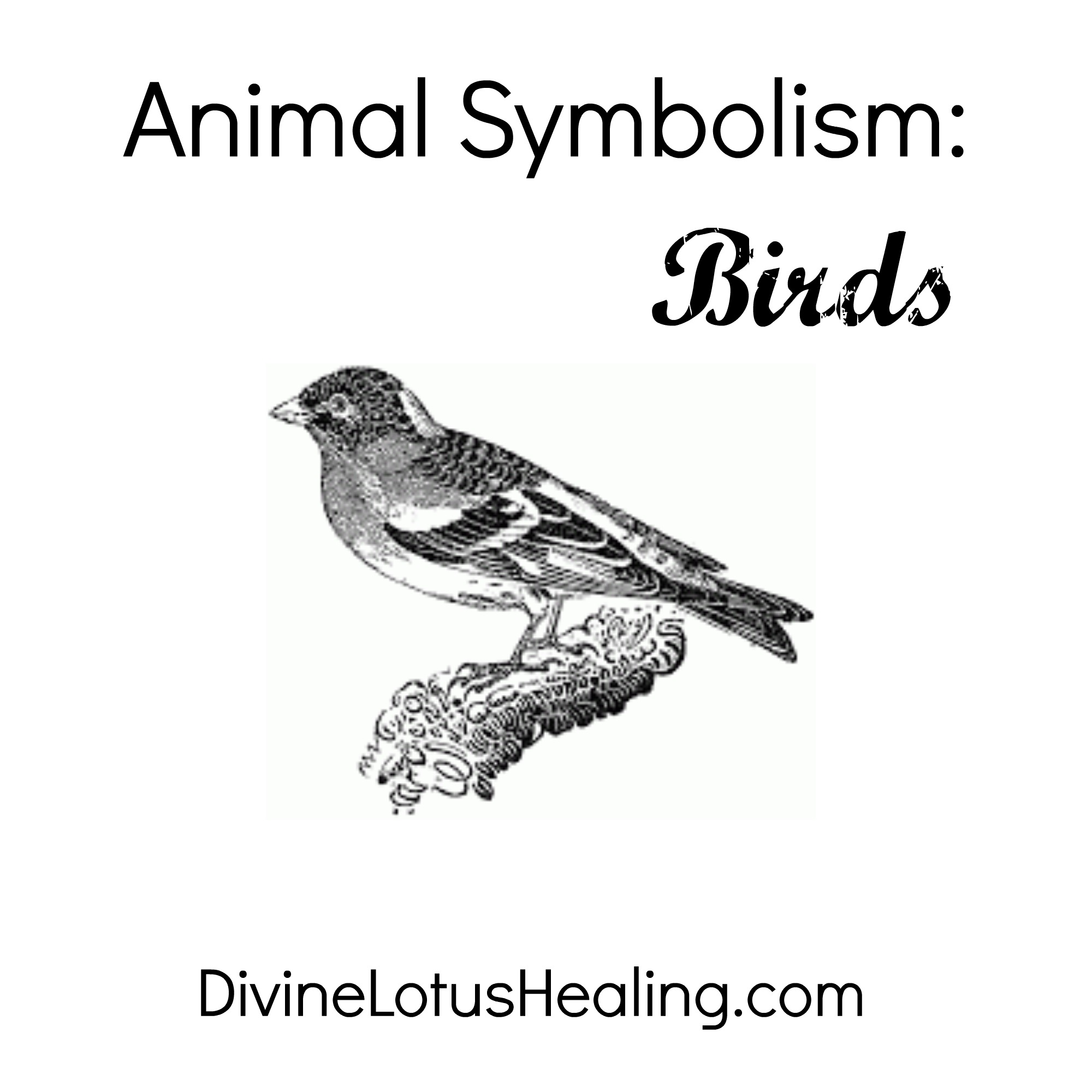 Animal Symbolism Of Birds Divine Lotus Healing