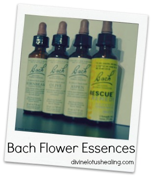 Divine Lotus Healing | Bach Flower Essences
