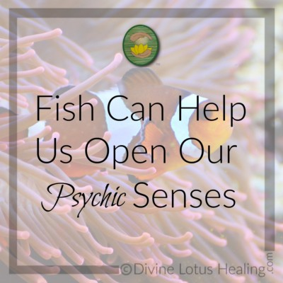Divine Lotus Healing | Fish Can Help Us Open Our Psychic Senses