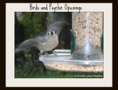 Birds & Psychic Openings