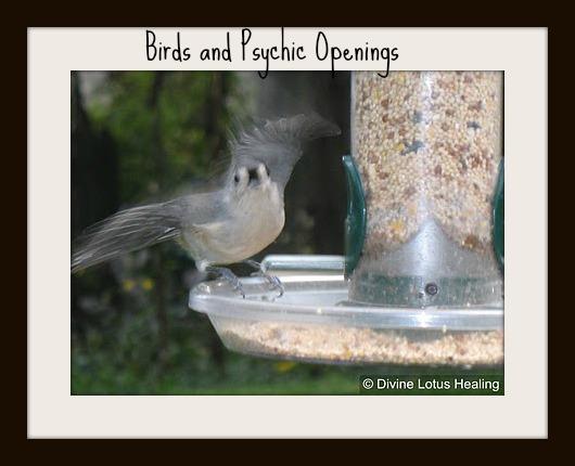 Divine Lotus Healing | Birds and Psychic Openings