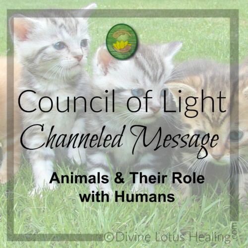Divine Lotus Healing Council of Light Channeled Message Animals and Their Role with Humans