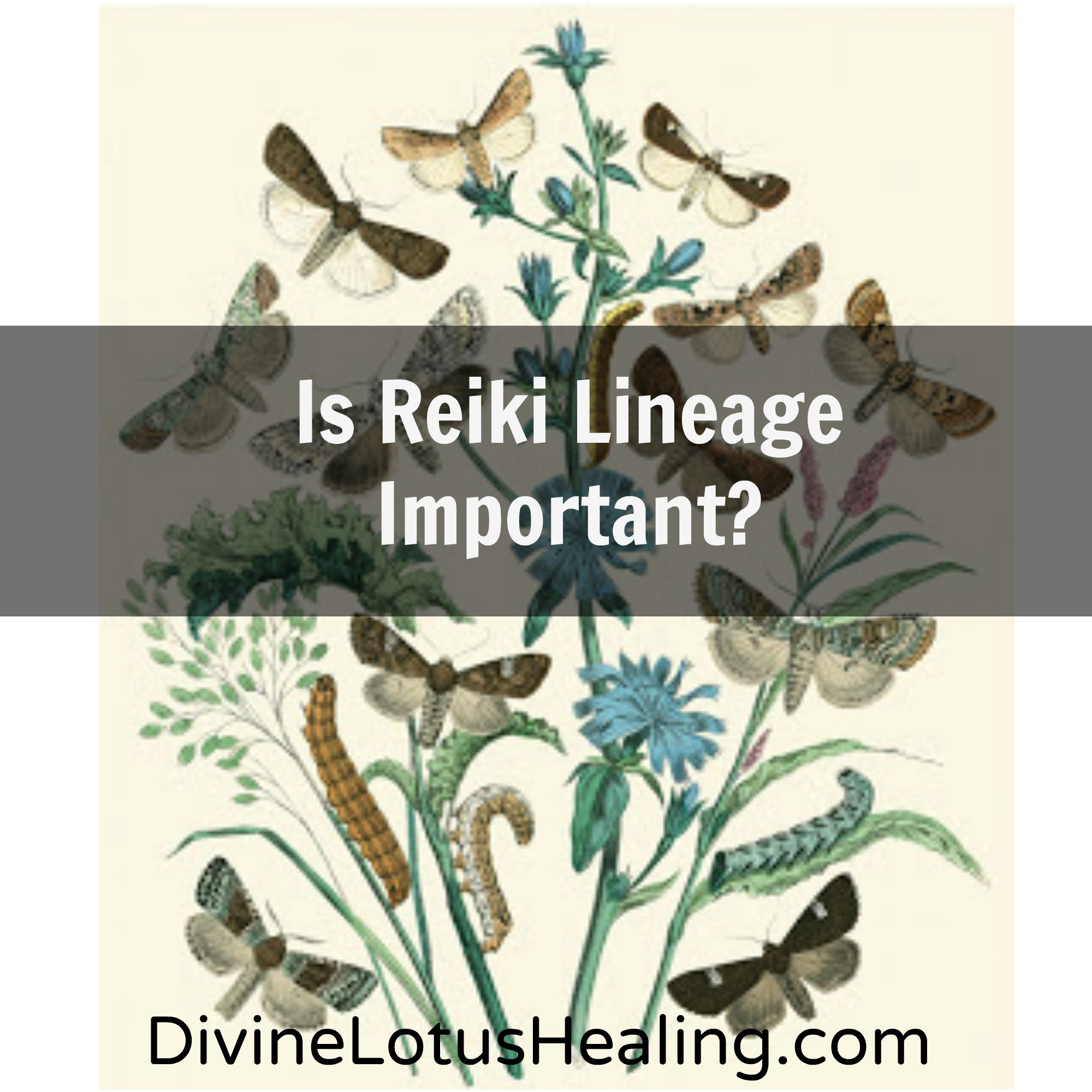 Divine Lotus Healing | Is Reiki Lineage Important