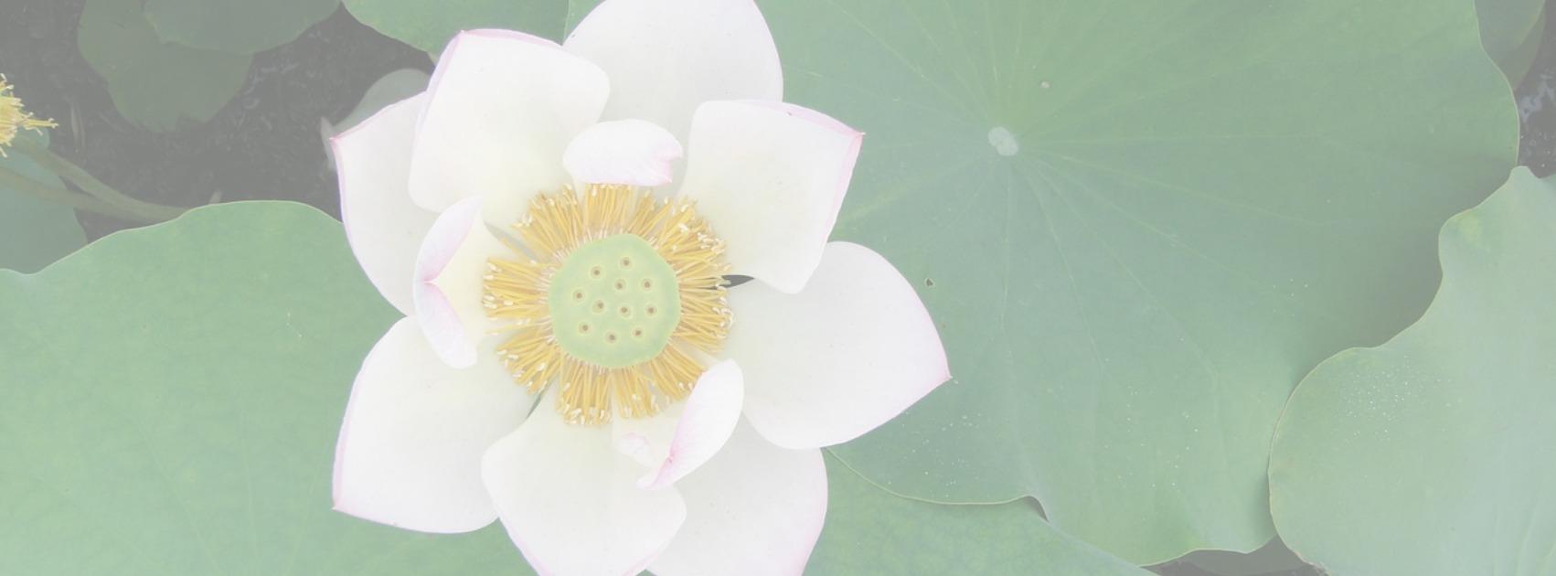 Divine Lotus Healing Spiritual Counseling Header