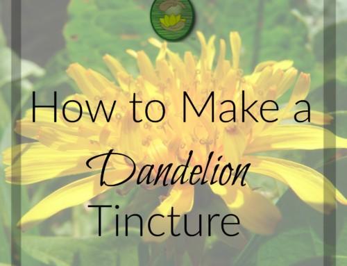 How to Make Dandelion Tincture