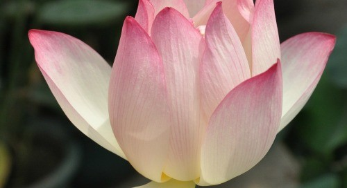 Divine Lotus Healing | How to Declutter the Energy in Your Home (a guest post)