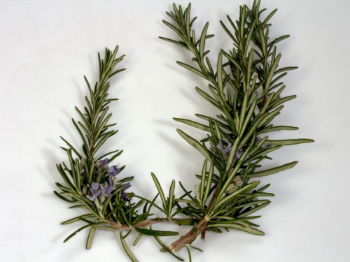 Divine Lotus Healing Rosemary Constipation Support