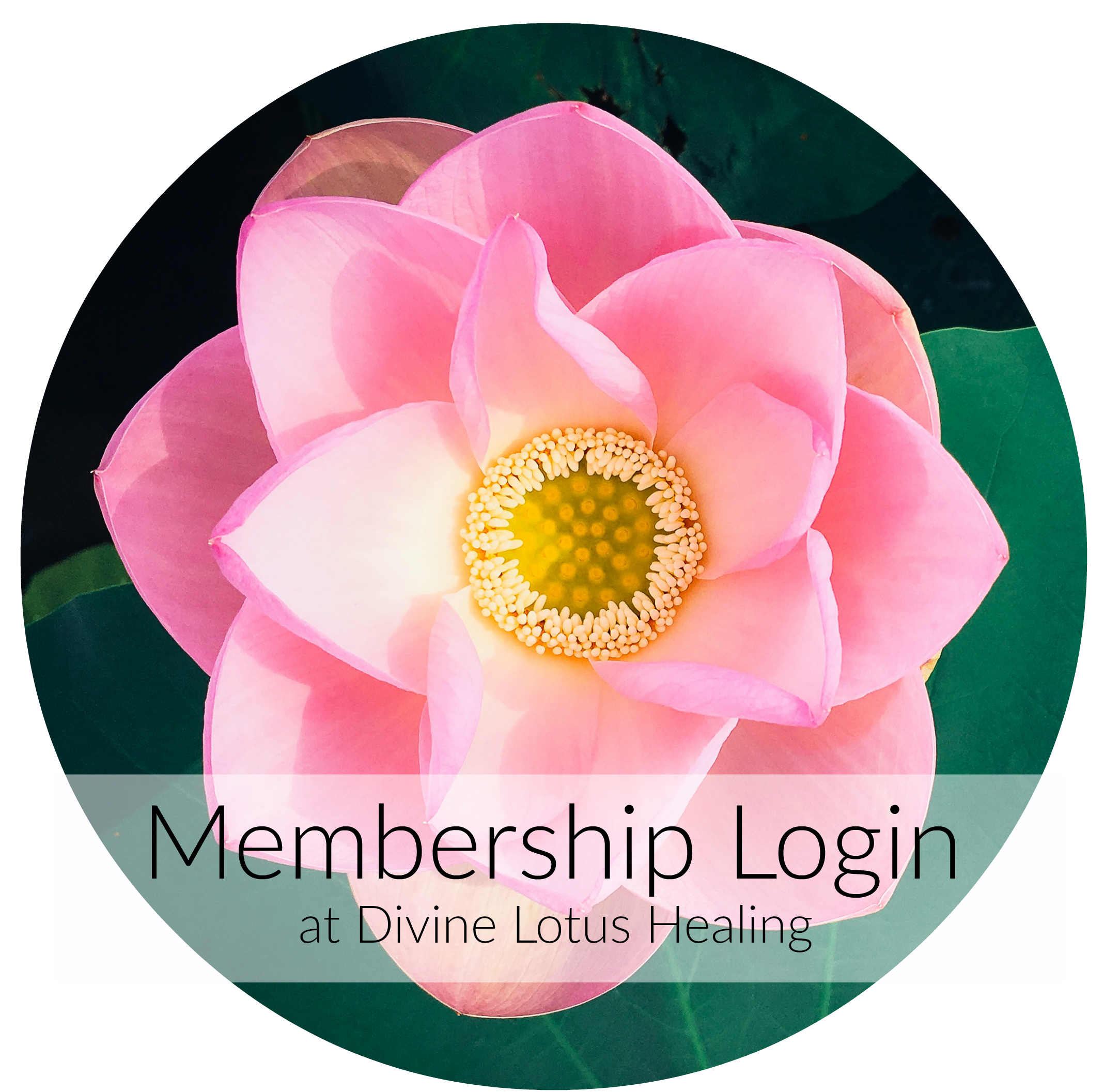 Membership Login at Divine Lotus Healing